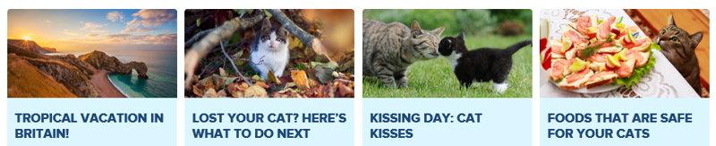 kitty bingo community hub screenshot