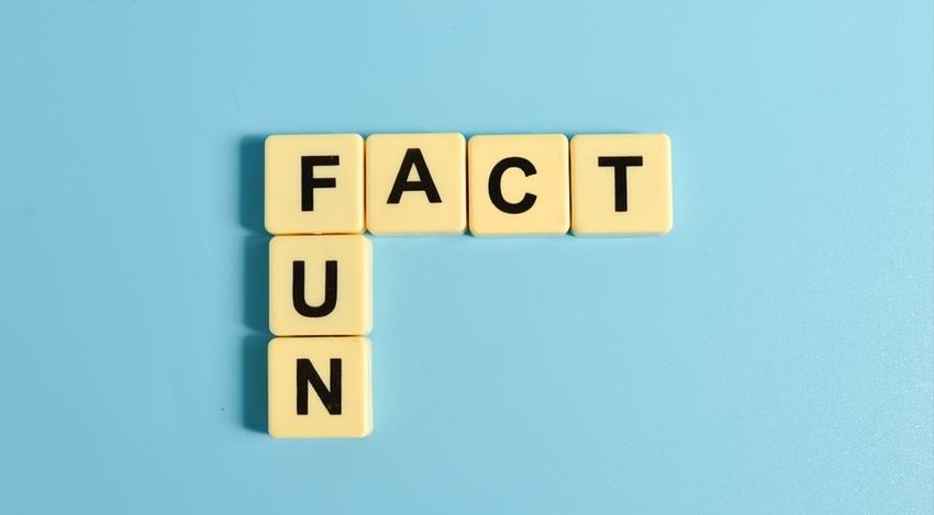 Trivia Bingo Facts